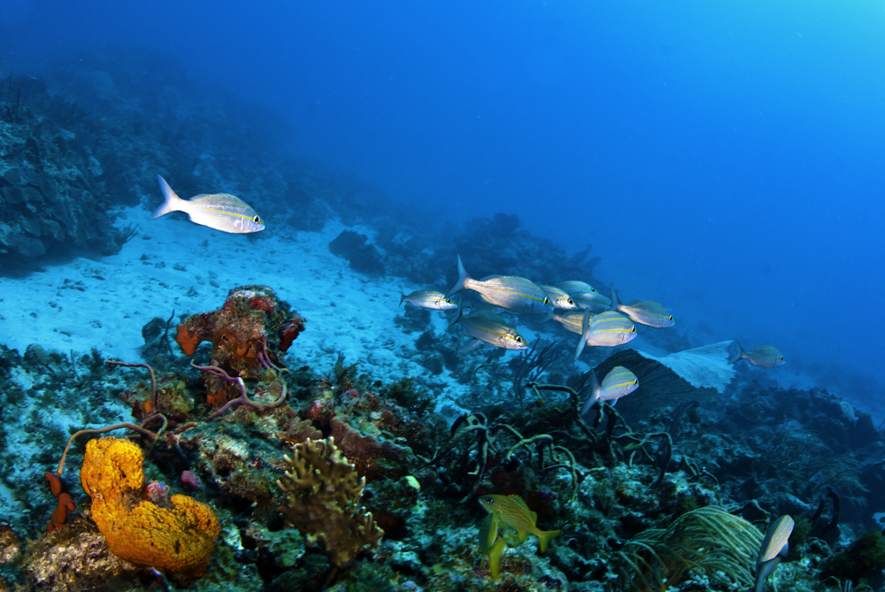 Scuba Diving at Tintamarre Island