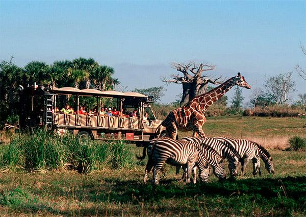 Disney's Animal Kingdom is one of the theme parks near Reunion Resort