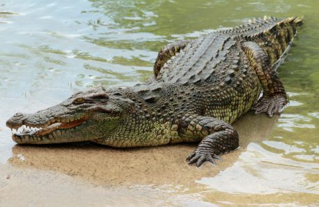 You can see crocodiles and alligators a short drive from Orlando