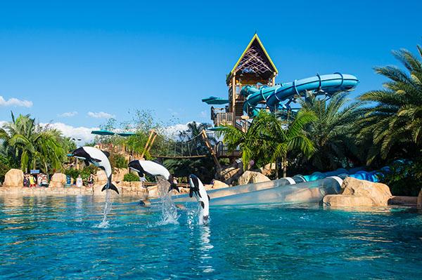 Dolphin plunge aquatica