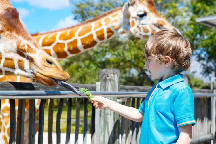 Activities for toddlers in Orlando