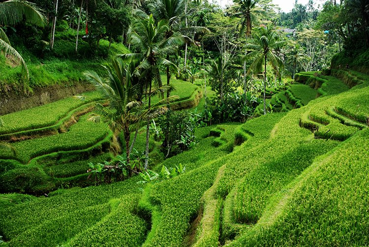 Bali is a great place to visit at any time of the year