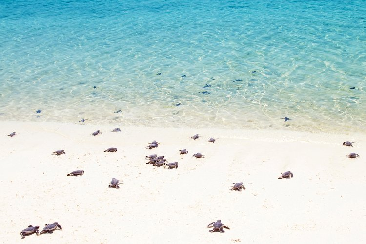 Grand Cayman Turtle Release