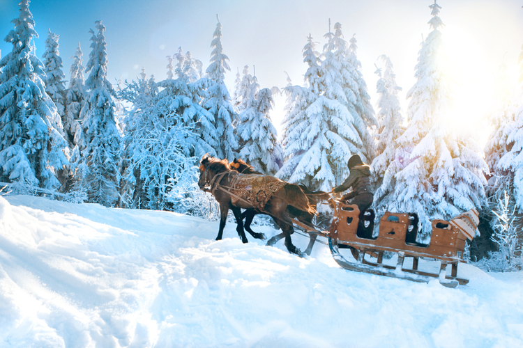 Big Sky horse sleigh ride