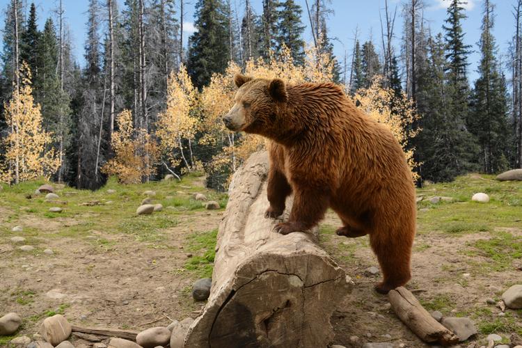 WIldlife in Big Sky Montana