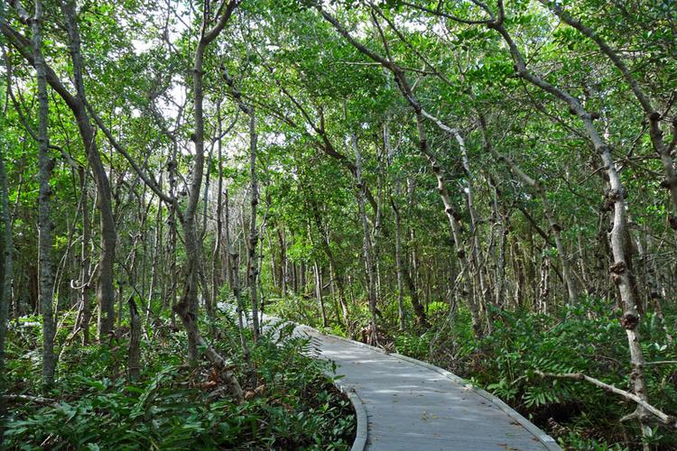 Four Mile Cove Ecological Preserve in Cape Coral