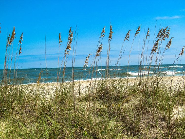 South Carolina beach with sea grass