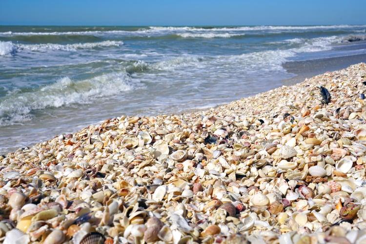 The best beaches near Cape Coral, Sanibel Island