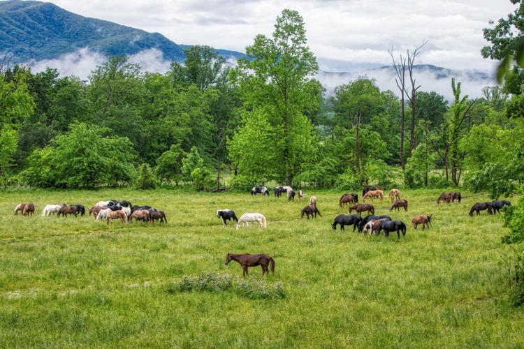 Horse riding Great Smoky Mountains