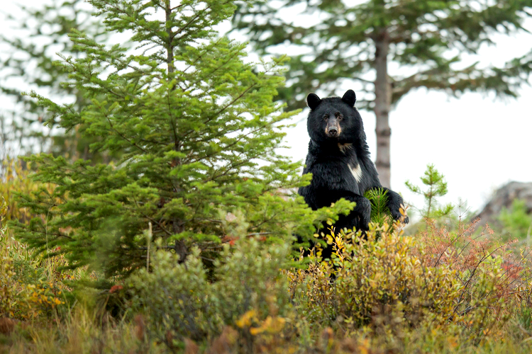 Wildlife spotting in Great Smoky Mountains