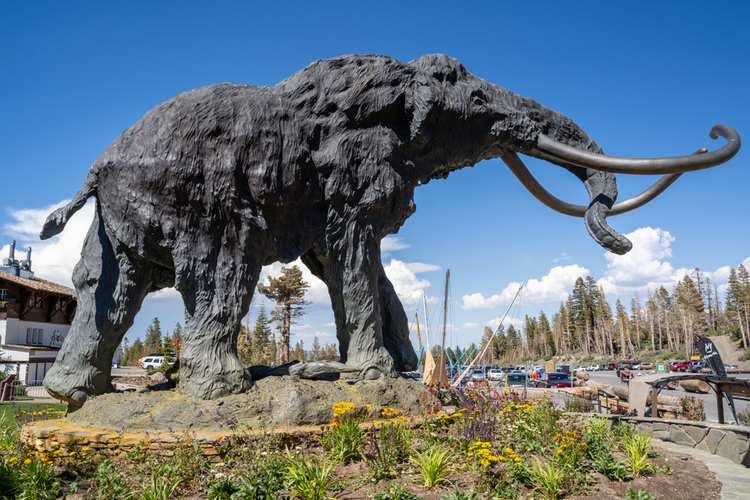 At the Mani Lodge, a great woolly Mammoth greets you as you begin your day on the Mammoth ski slopes