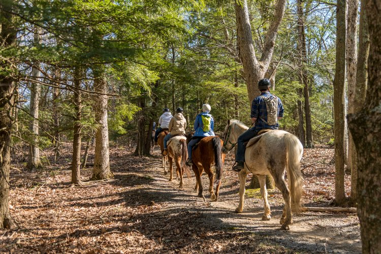 Horseback riding is one of the most fun things to do in Hot Springs Virginia