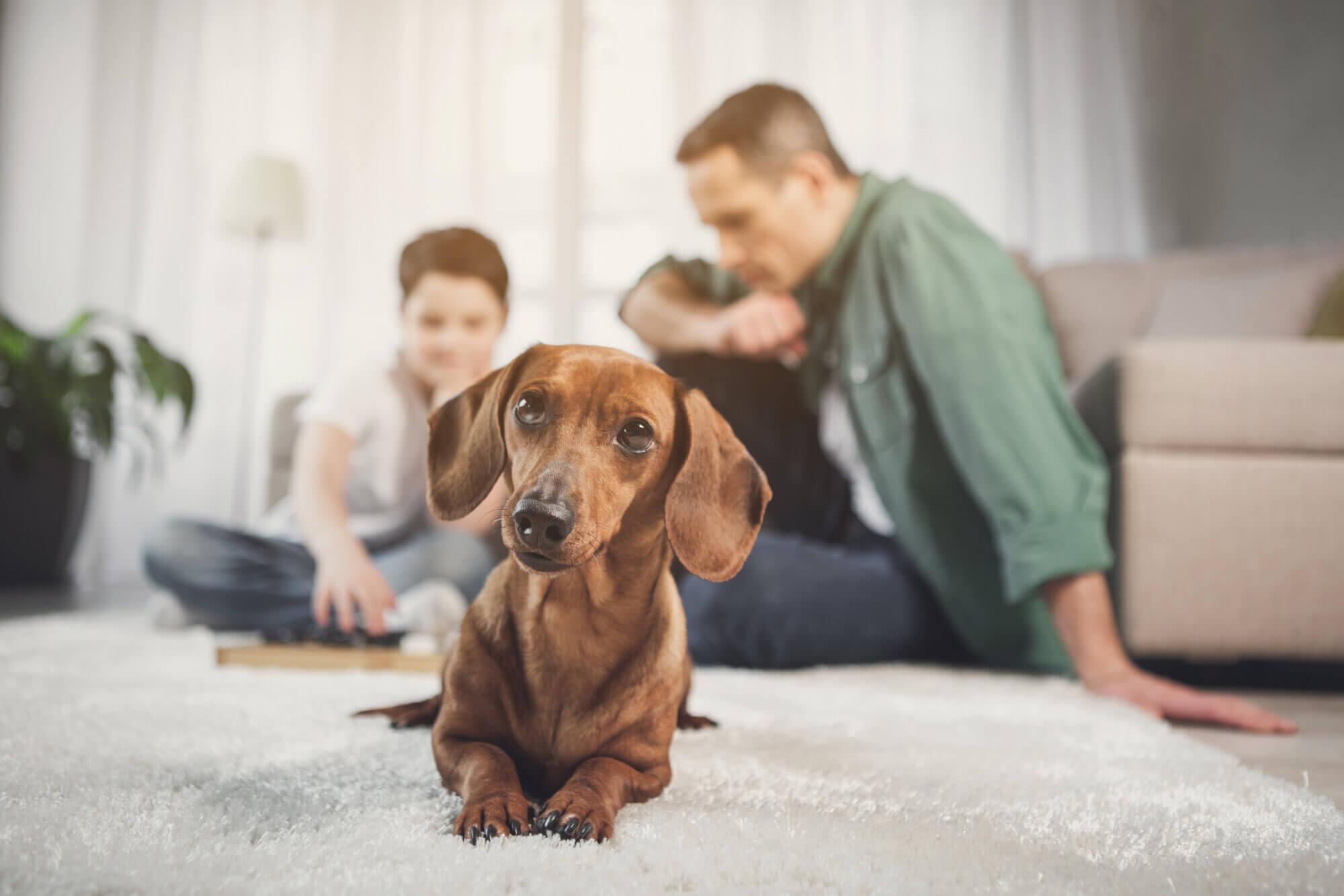 Dog in Orlando vacation villa