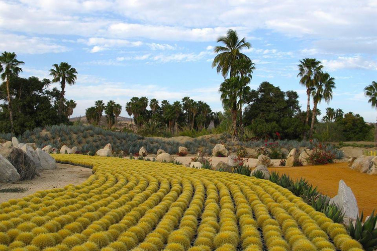 There are millions of plants at the Wirikuta Cactus Gardens in Mexico