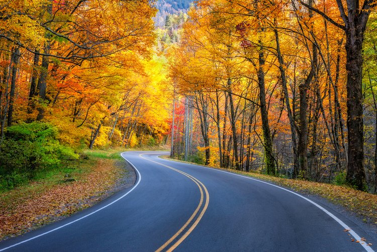 Nothing beats driving through the Great Smoky Mountains in the fall!