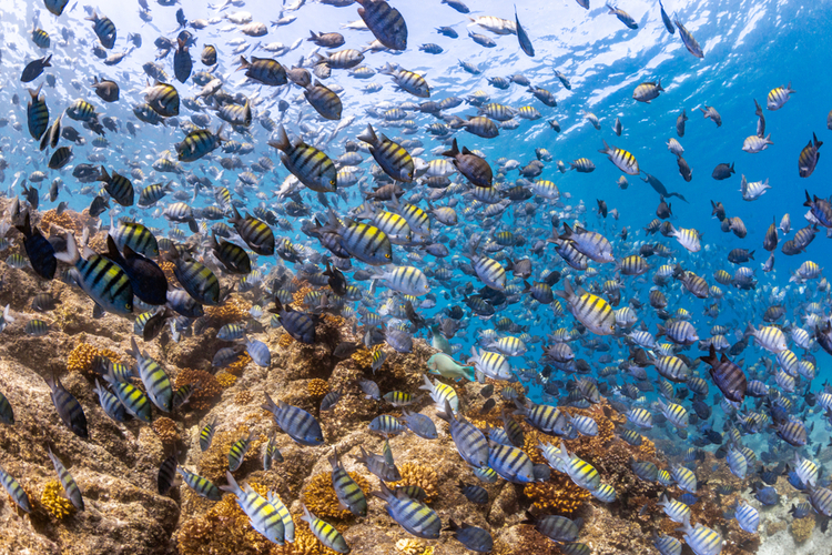 Scuba diving is one of the best things to do in Cabo San Lucas