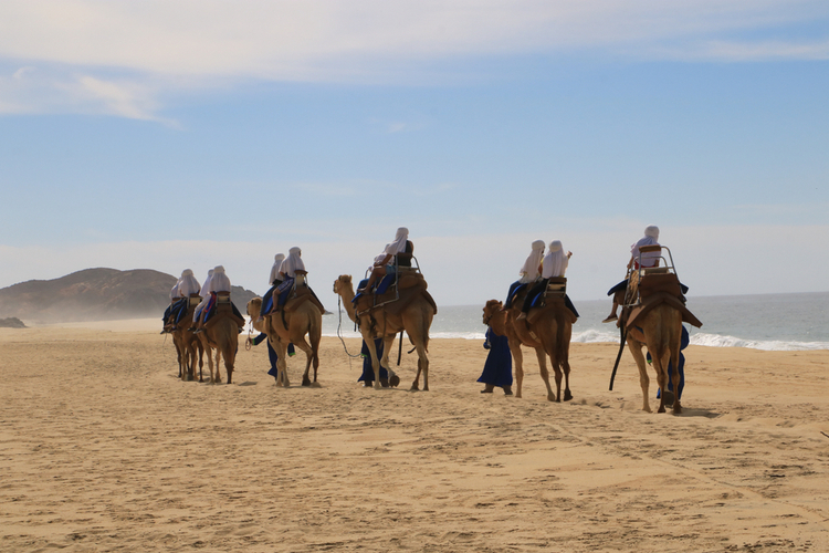Camel riding is one of the most unique things to do in Cabo San Lucas