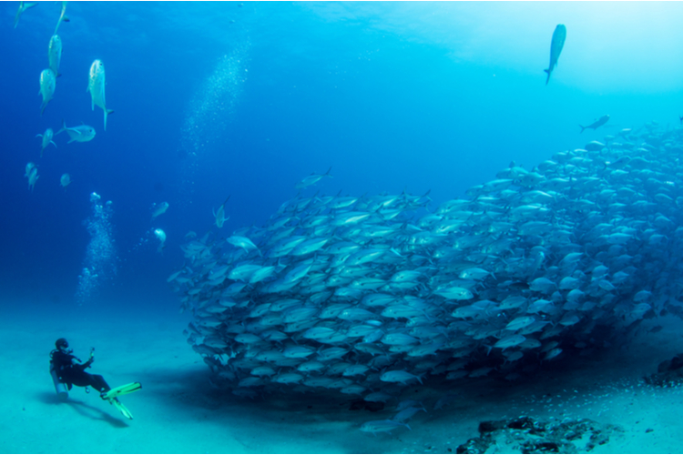 Diving at Cabo Pulmo National Marine Park is an unforgettable experience