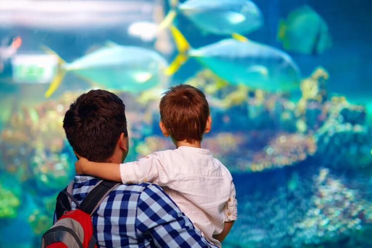 A man and boy look through the glass at fish in an aquarium