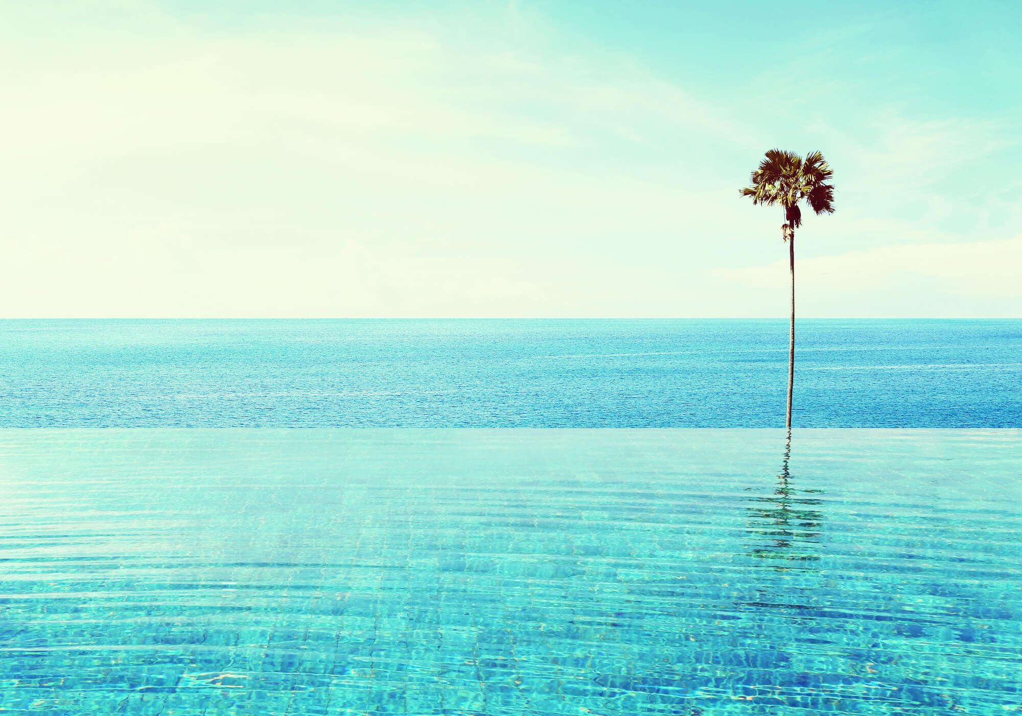 An infinity edge pool overlooking the ocean, with a single off center palm tree