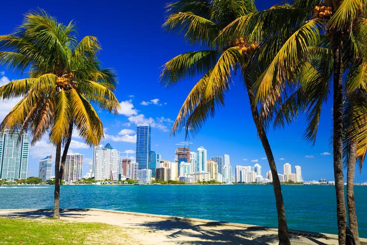Miami skyline framed by palm trees